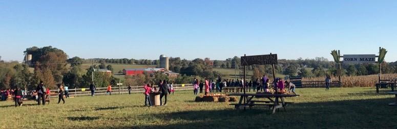 Fields of fun at Huckleberry Trail Farm